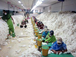 Reinigung von Baumwolle vor dem Spinnen